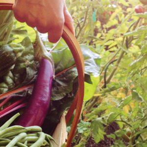Garden Vegetable Basket
