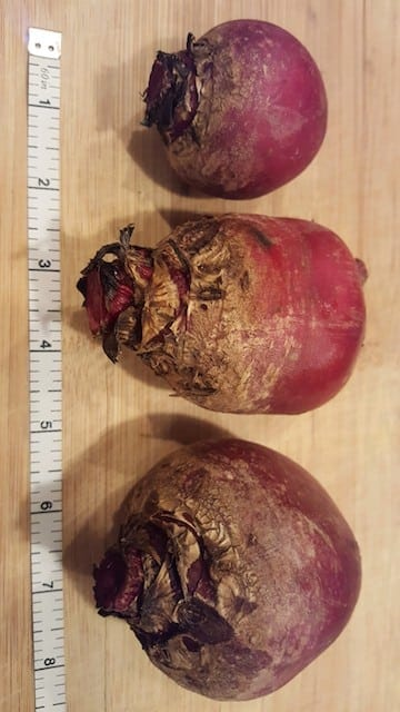 measuring beets