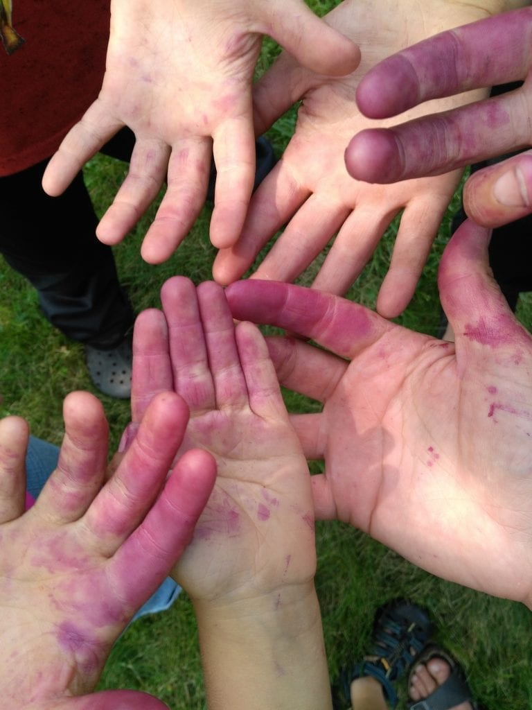 elderberry hands